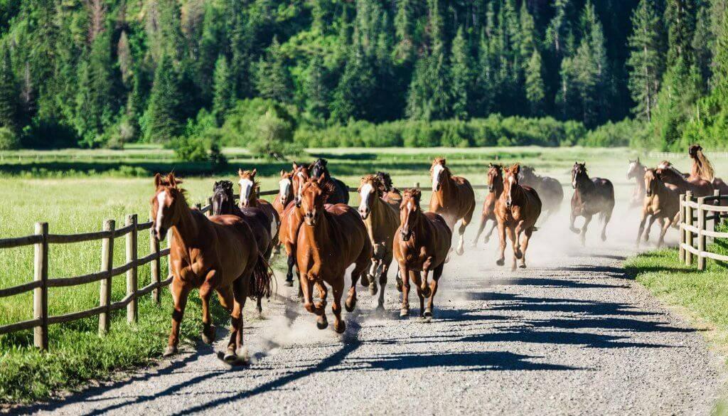 Horseback Run, Red Horse Mountain Ranch