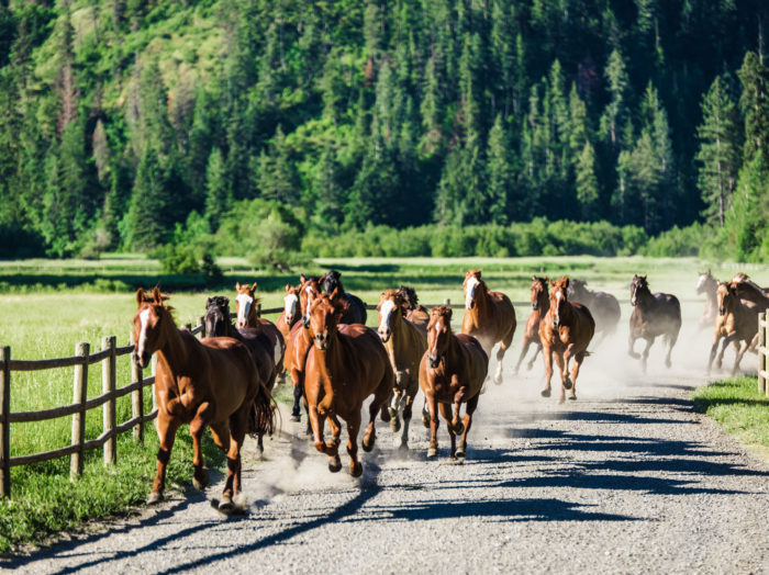 Horseback Run, Red Horse Mountain Ranch, Harrison. Photo Credit: Idaho Tourism