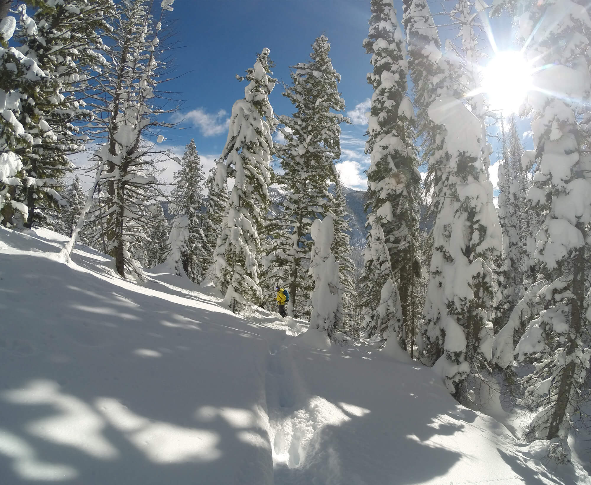 backcountry skiing in forest