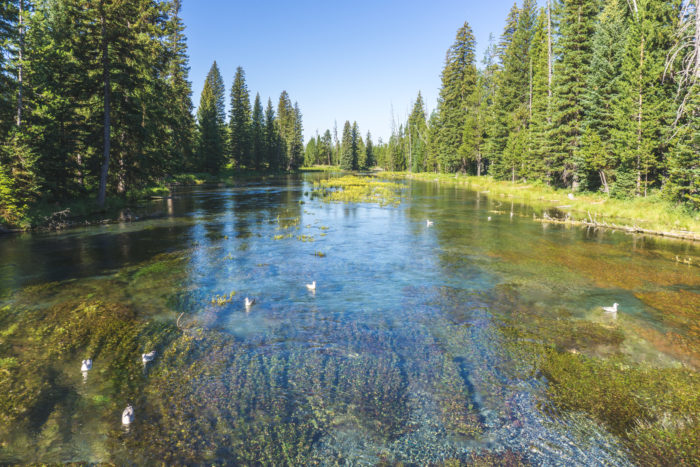 crystal clear water of a mountain spring