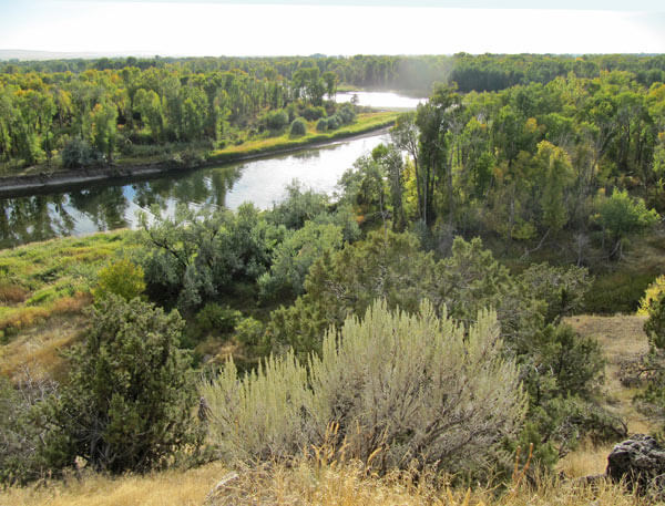 trees and sagebrush along a river