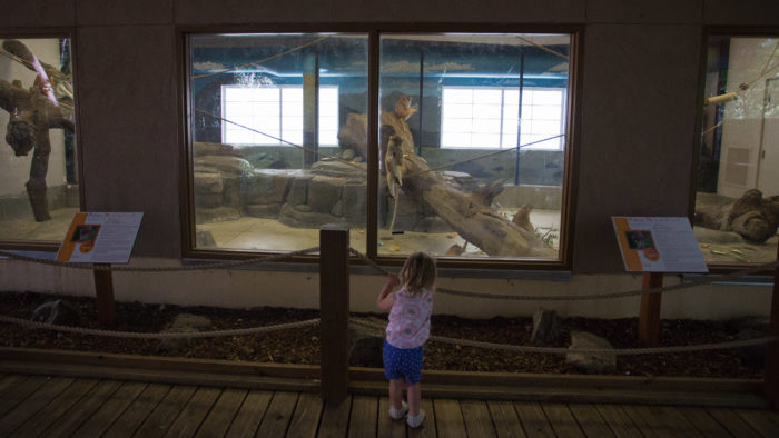 child in front of monkey exhibit