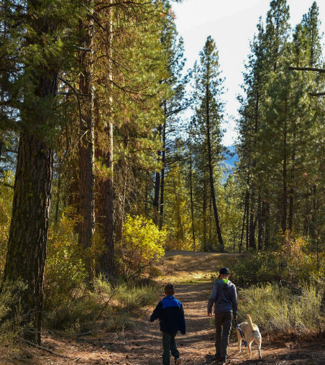 Charcoal Gulch trail offers a great escape in the mountains. Photo Credit: Christina McEvoy.