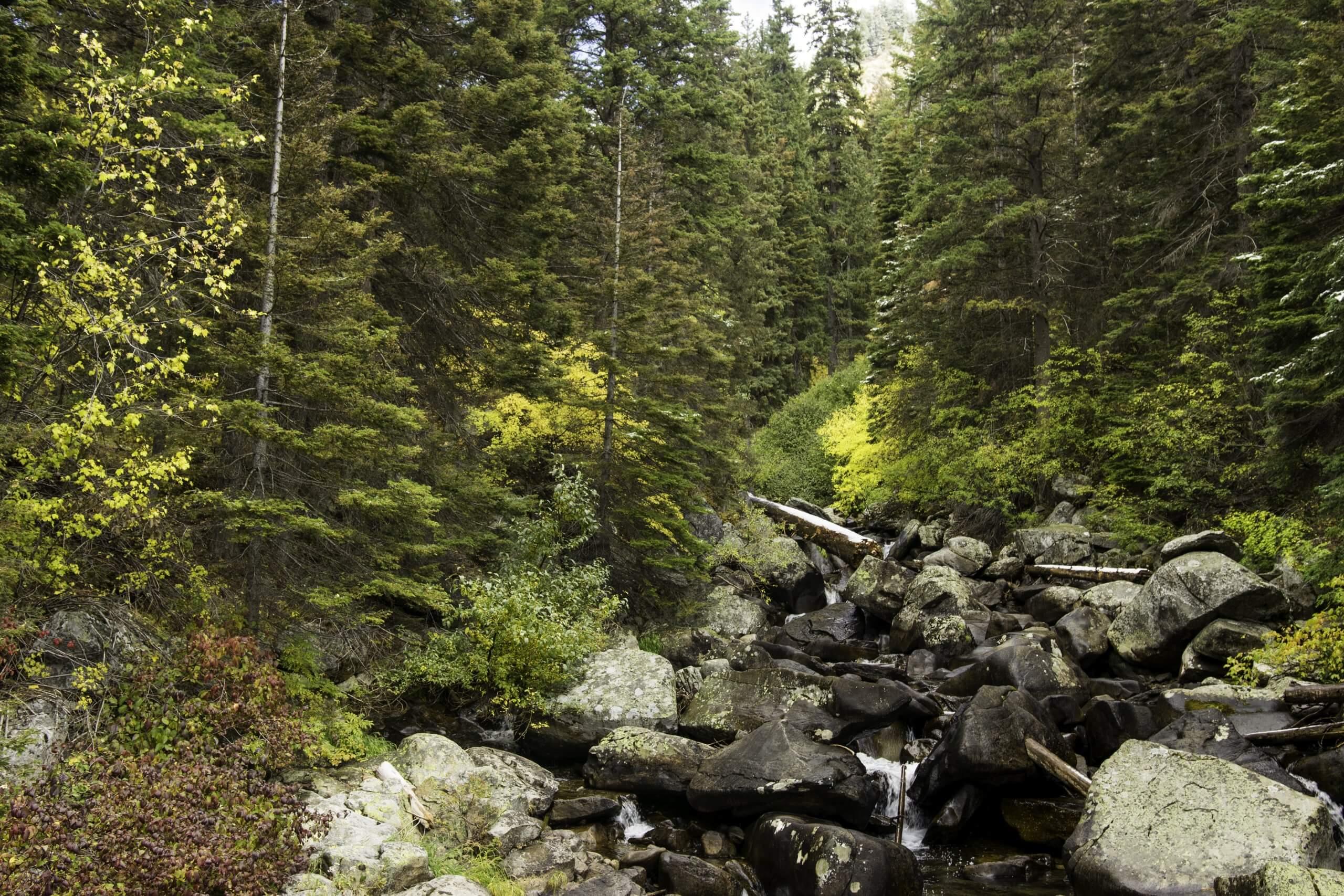 hiking in fall foliage