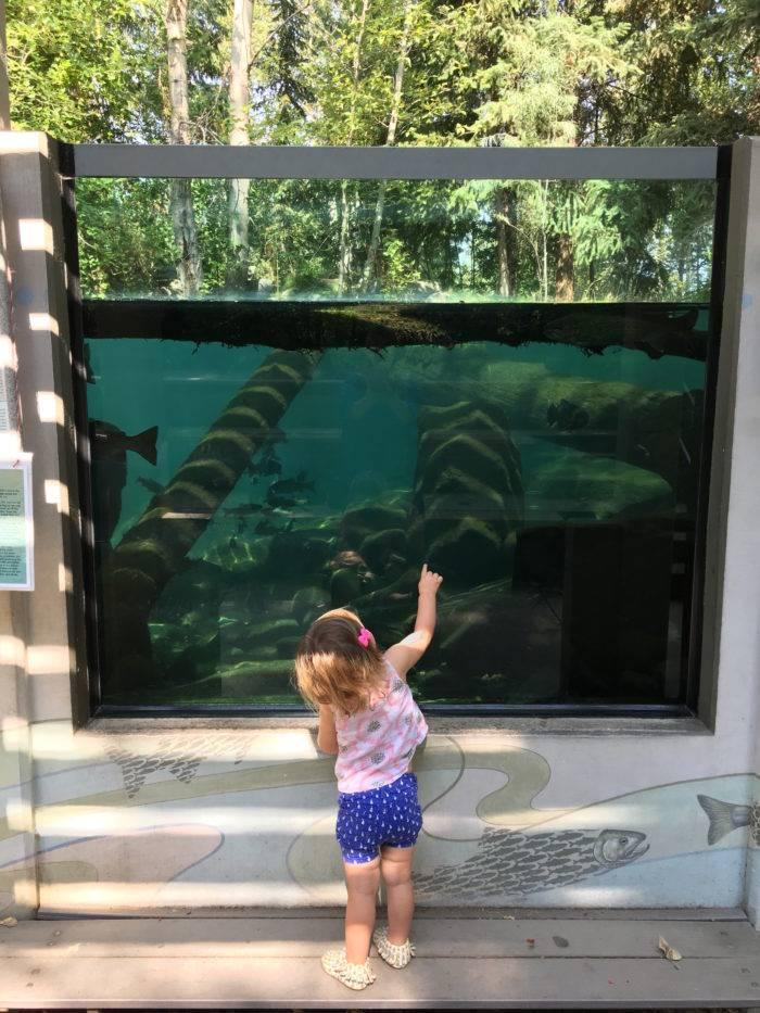 girl in front of fish exhibit