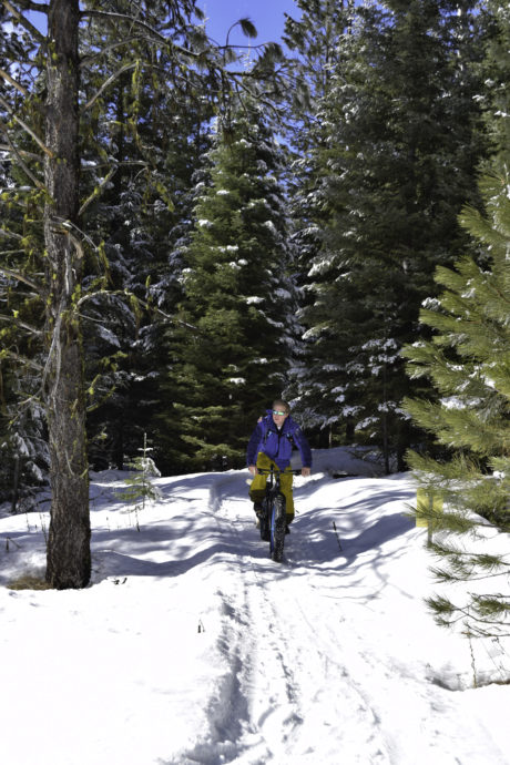people riding fat bikes
