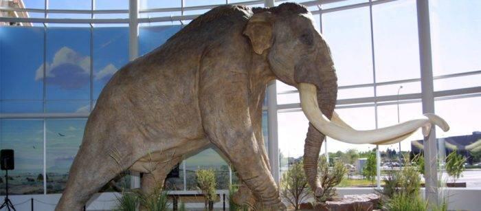 mammoth museum exhibit