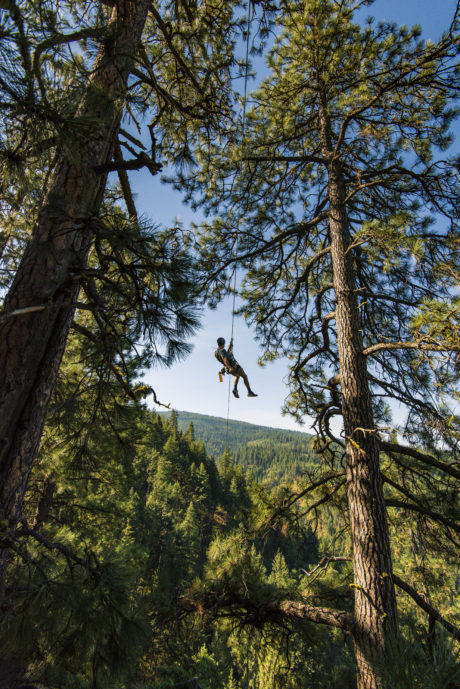 person on zip line surrounded by trees