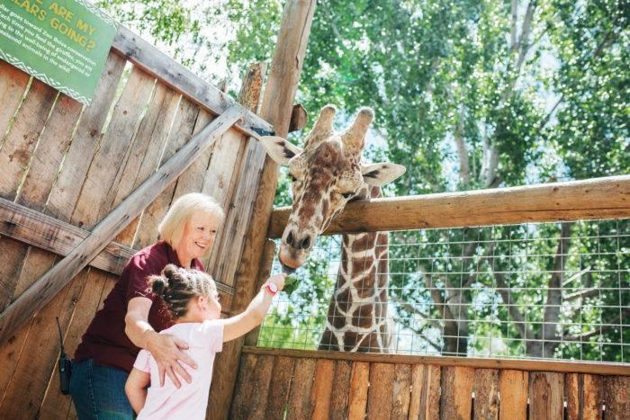 Feeding the giraffe at Zoo Boise, Boise.