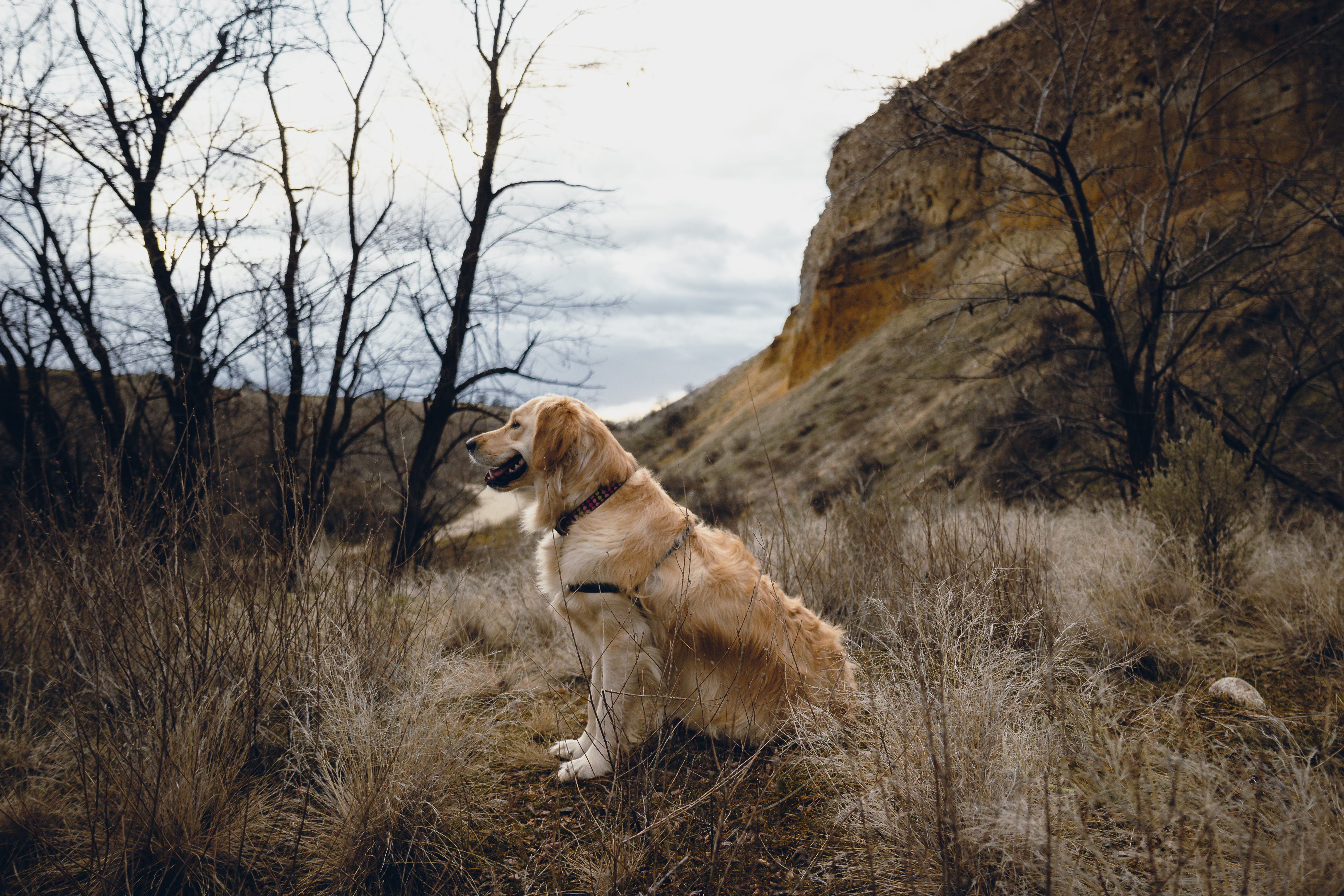 dog on a mountain trail