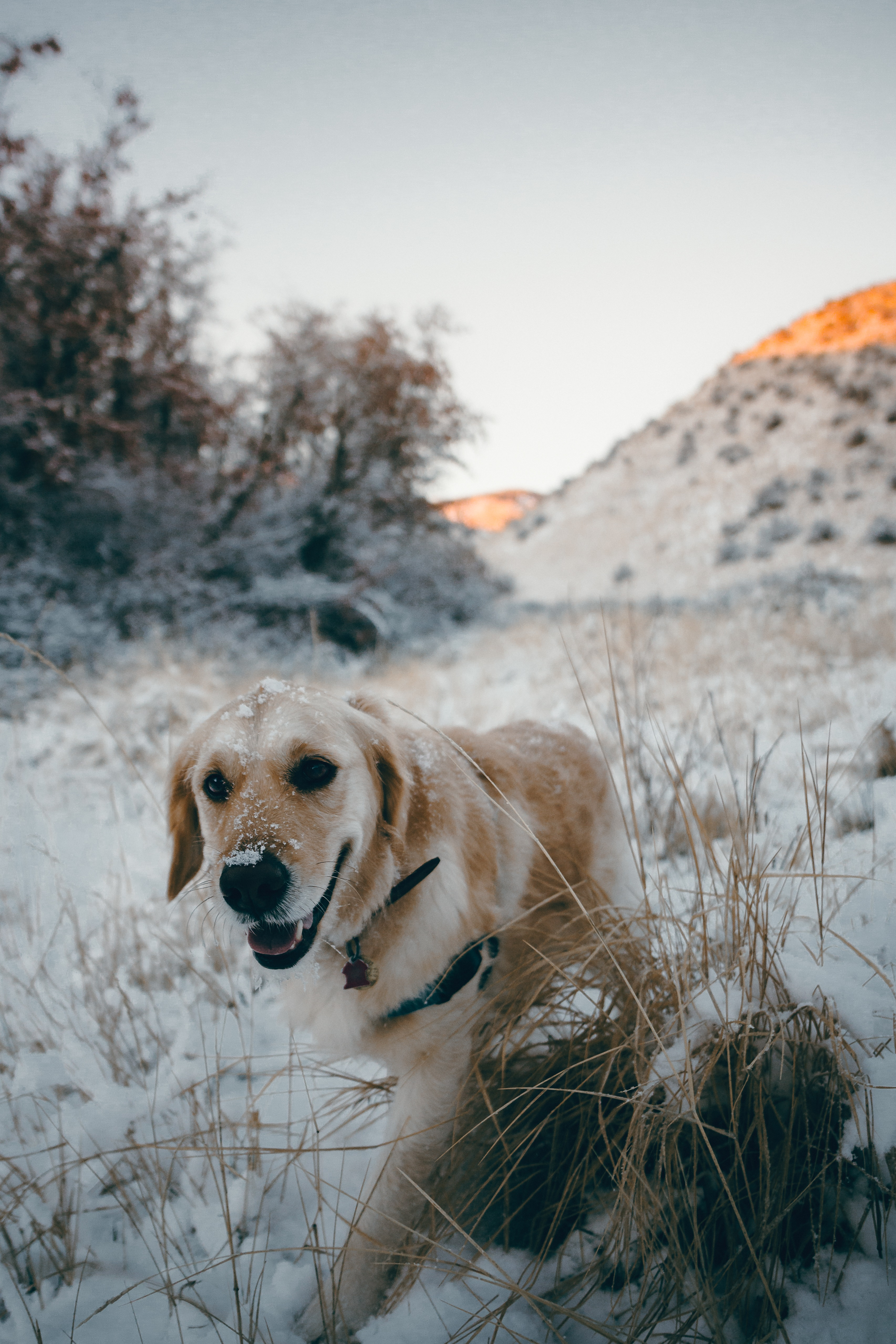 dog with snow on it
