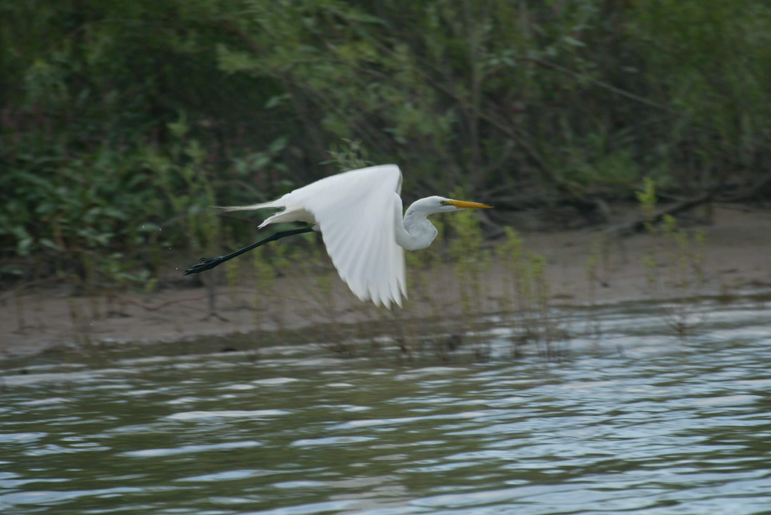 You'll find all sorts of wildlife at Lake Lowell. Photo Credit: Larry Hill.