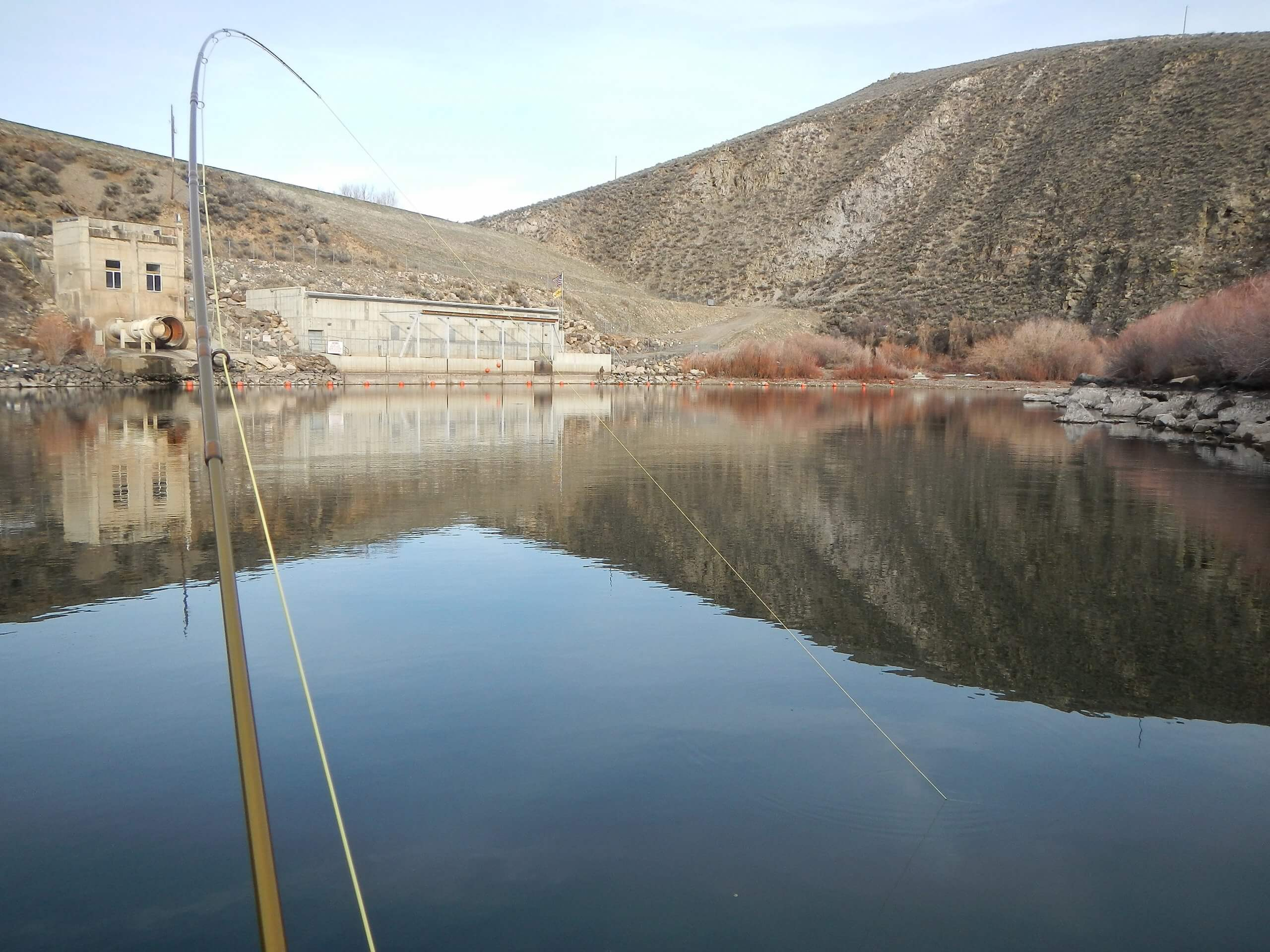 Monster fish can be found in Magic Reservoir. Photo Credit: Mike McKenna.