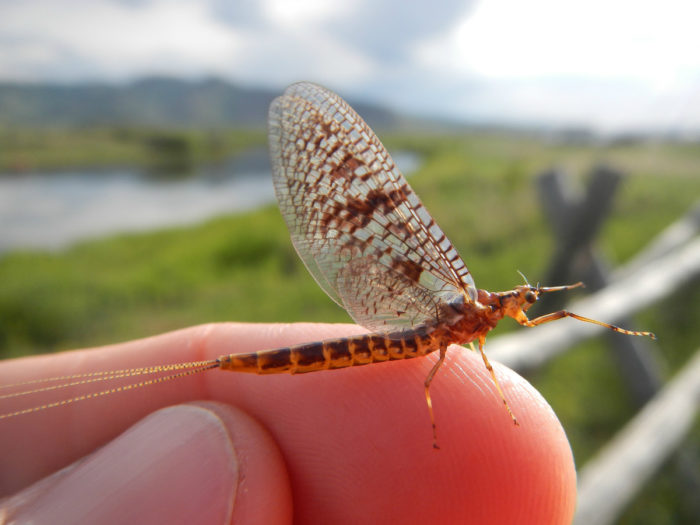 insect on a finger