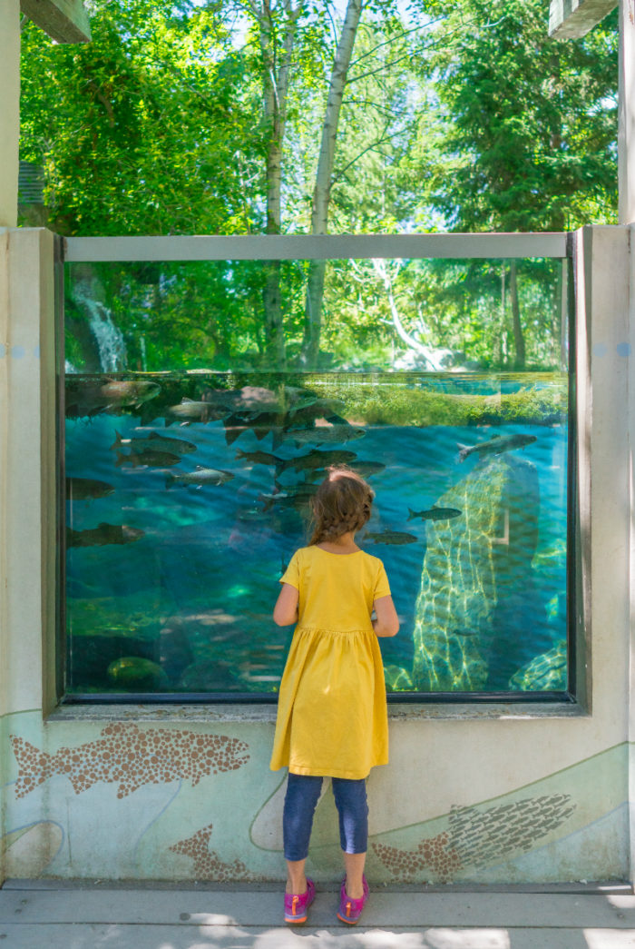 child standing in front of fish tank