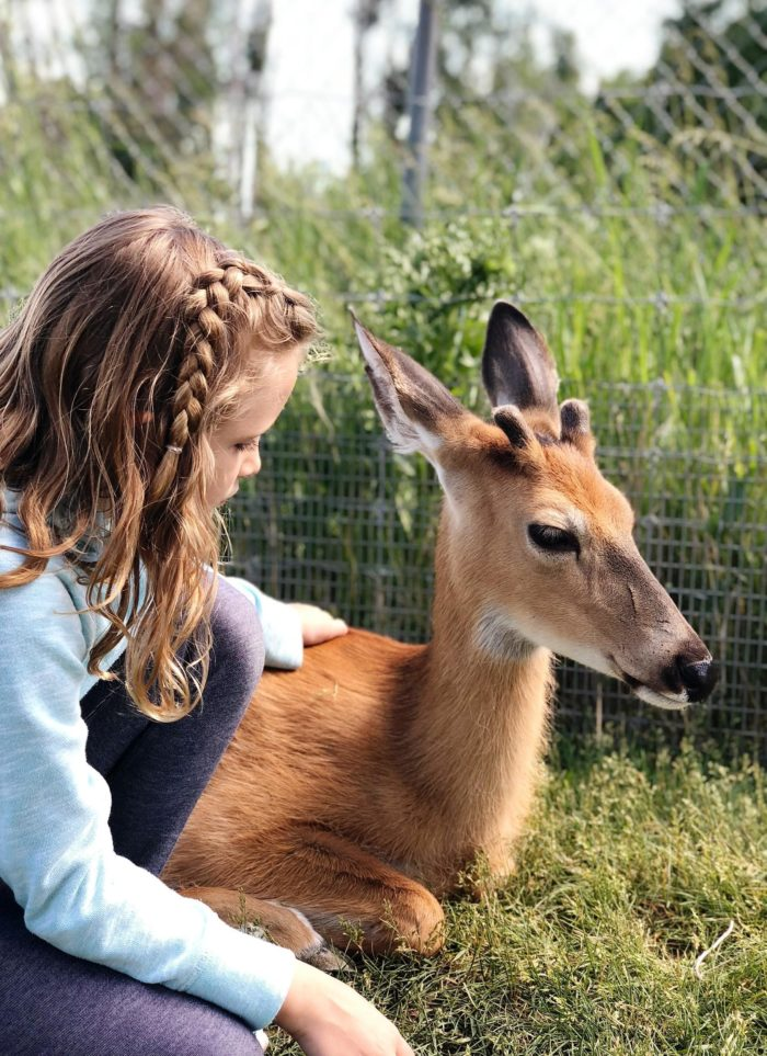 child petting a deer