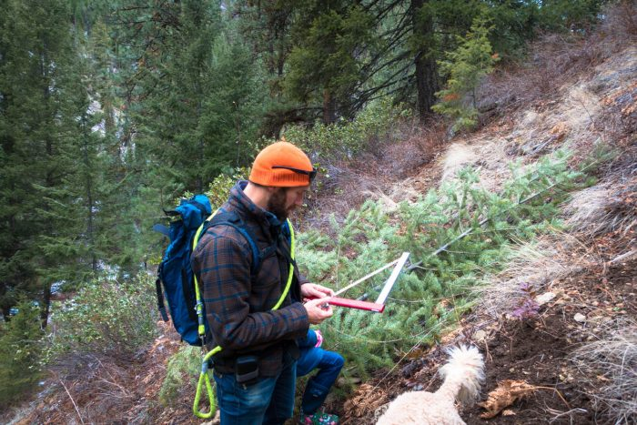 man next a pine tree