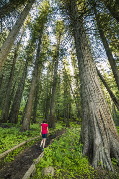 woman walking on path surrounded by trees