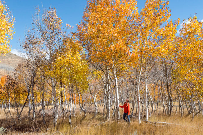 person standing next to coloful aspen trees
