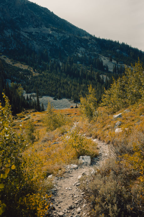 yellow fall colors alice lake