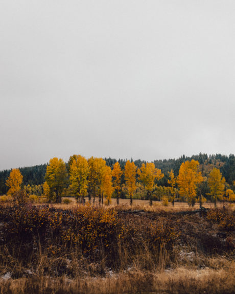 fall colored trees along highway 55