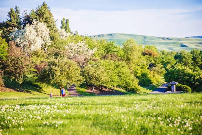 people walking on path among trees