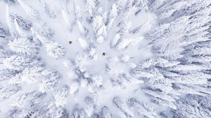 skiers weaving between trees