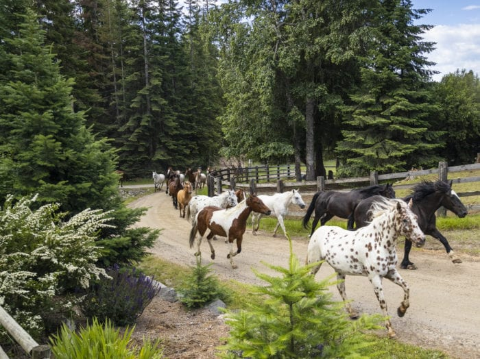 The horses at Western Pleasure Ranch help kick start the day. Photo Credit: Idaho Tourism.