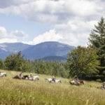Spend the day enjoying a horseback ride. Photo Credit: Idaho Tourism.