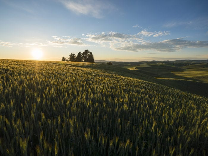 Don't miss out the rolling hills of the Palouse near Moscow. Photo Credit: Idaho Tourism.