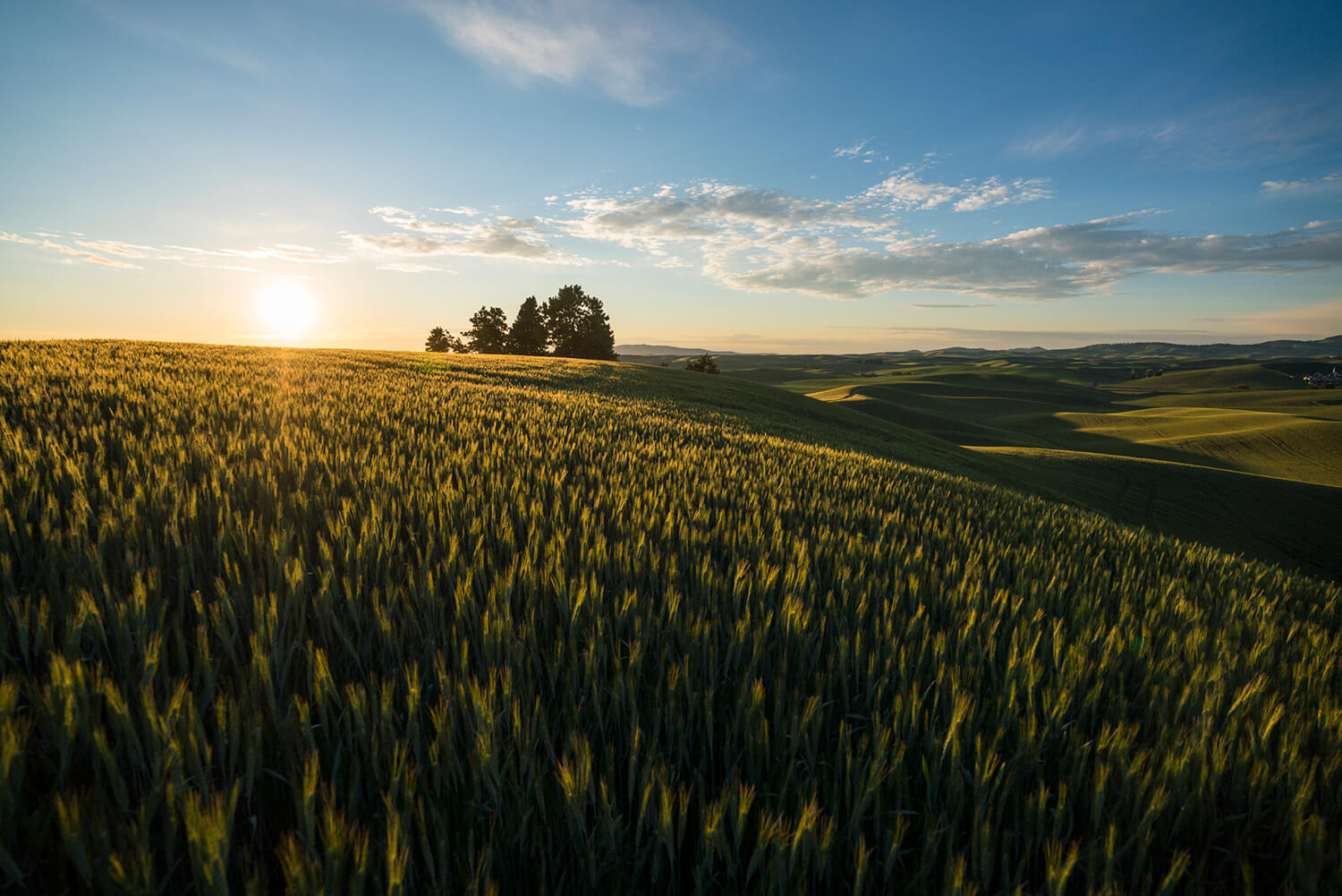sun setting over Moscow, Idaho's green rolling hills landscape with trees in the background