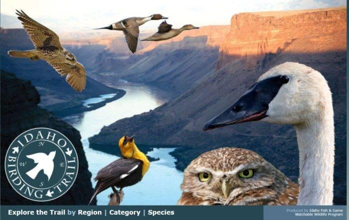screenshot of idaho birding trail guide