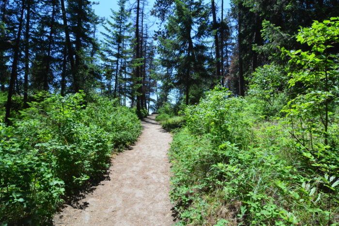 tubbs hill wooded trail