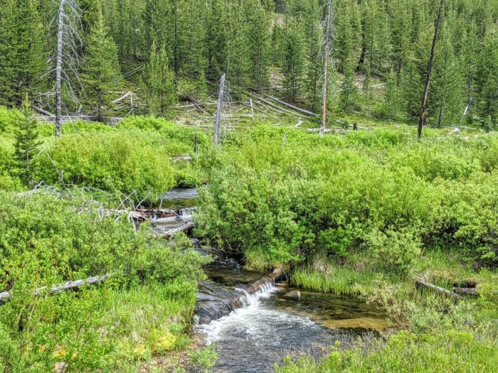 mountain creek surrounded by brush