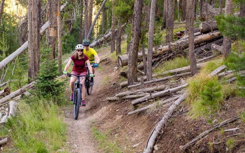 two people riding mountain bikes along a trail in a forest with several felled trees