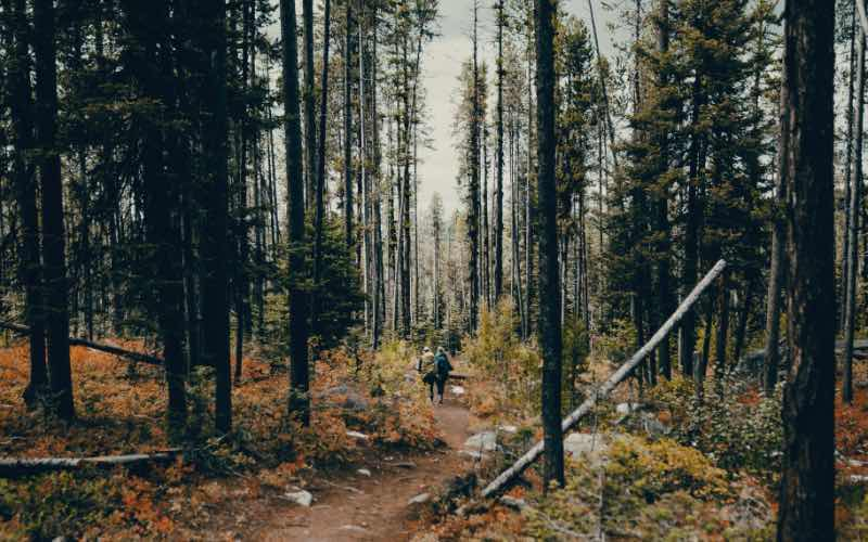 two people walking along a path in a forest during the fall