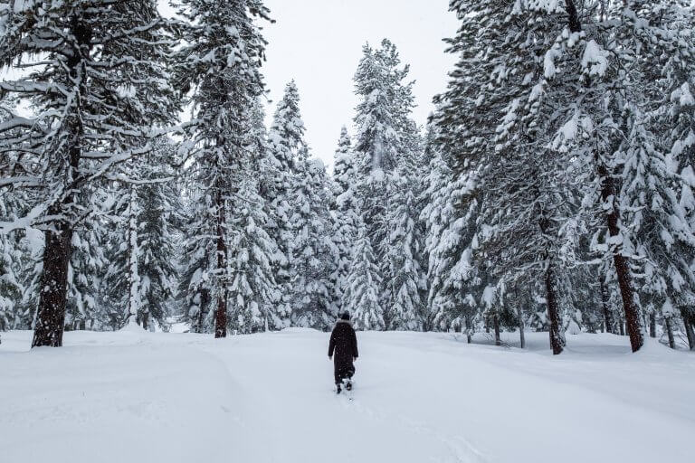 snowy forest with woman walking on snowy path