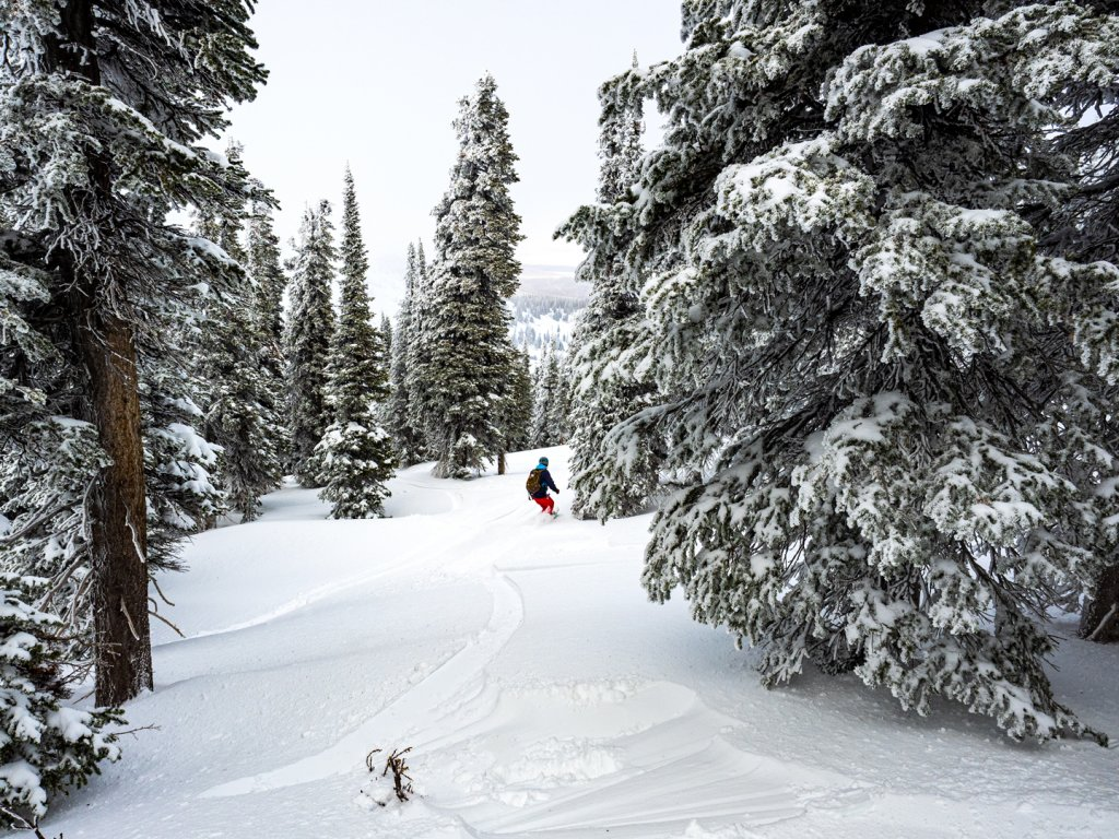 person snowboarding among snowy pine trees