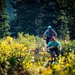 two men riding mountain bikes through a forest of trees