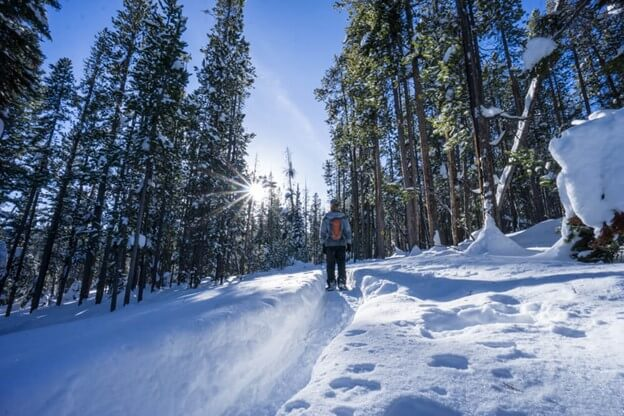 person snowshoeing among tall trees