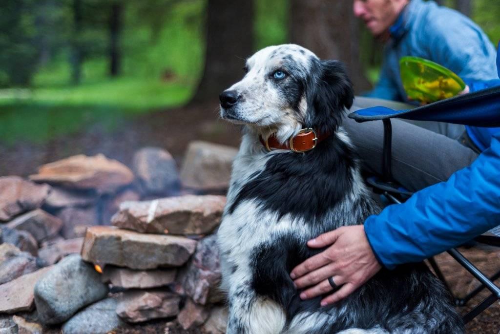 dog sitting next to campfire