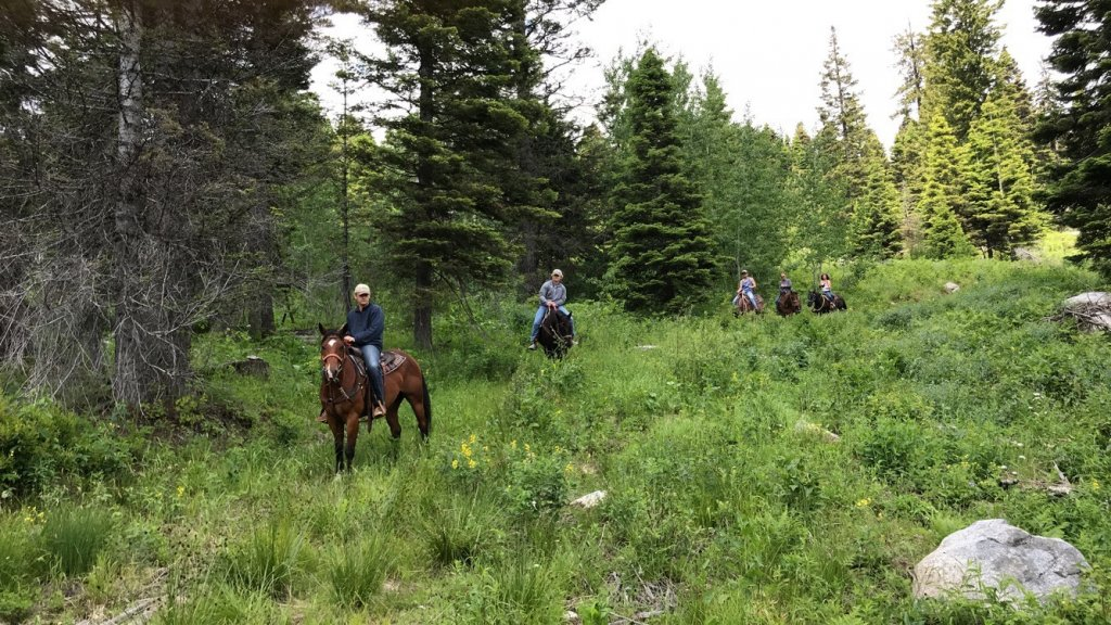 five people ride horseback through a lush green forest in the Payette National Forest with Ya-Hoo Corrals
