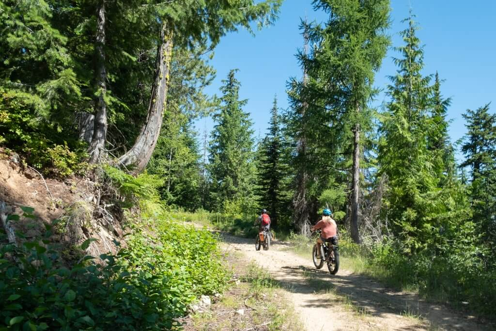people on bikes on forest trail