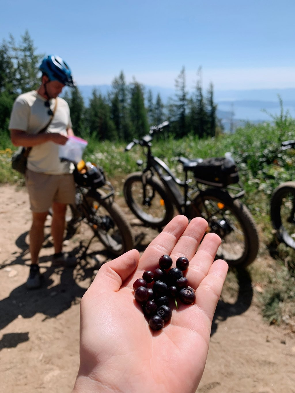person holding handful of huckleberries