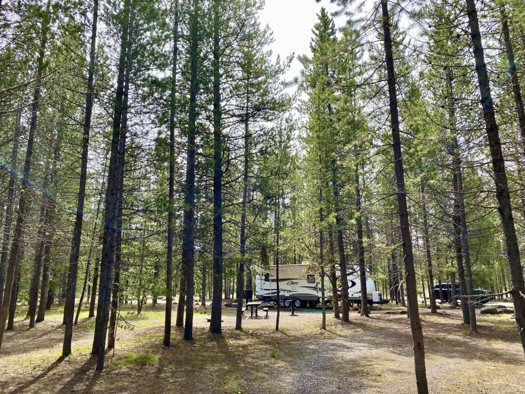 camper in amongst trees at big springs campground