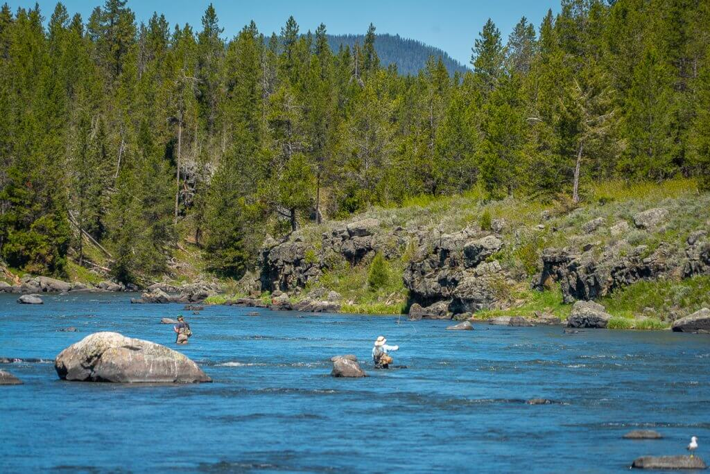 people fly-fishing in a river