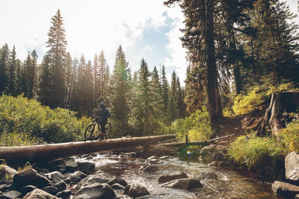 a person walking their mountain bike across a fallen tree over a river within a forest of tall trees