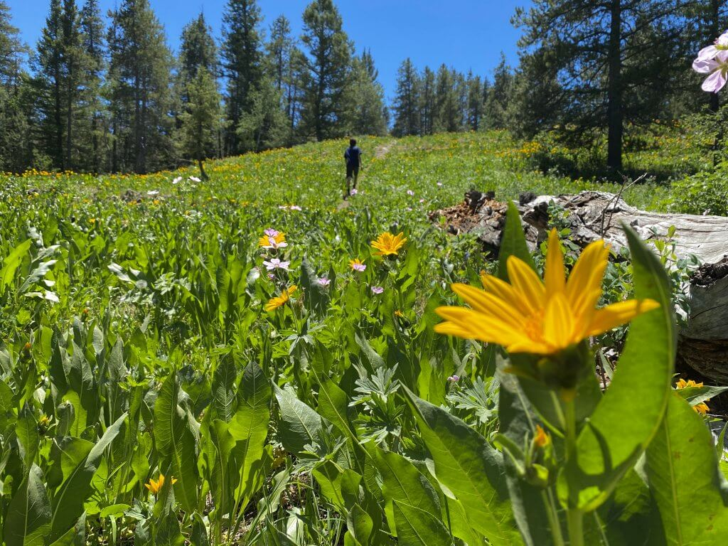 person walk in meadow of wildflowers